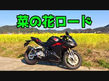 【モトブログ】菜の花の南房総半島ツーリング【CBR250RR】