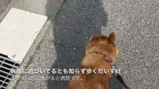 散歩だと騙して病院連れて行ってみたら、犬の察知が素早かった。