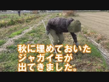 ジャガイモ定植実験!除草・土寄せの有無の影響について調べる:2019年2月14日【栽培実験】