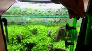【アクアリウム】0からミスト式で30cm水草