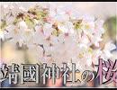 【東京は満開】靖国神社の桜[桜H31/4/1]