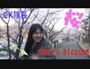 CHAKAのお花見2019 桜が1100本も植えられた公園!