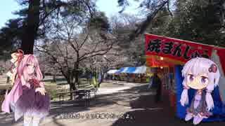 彩の国探訪録 第3回「桜の色を求めて」【