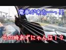 【旅猫あずき】怖いもの見たさ|д・)【traveling cat by car】