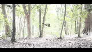 【キッコロ先生】Twig【踊ってみた】