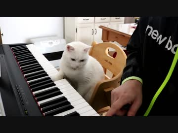 Piano Lesson Too Tough Of The Cat Teacher