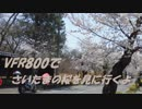 VFR800でさいたまの桜を見に行くよ ~奥武蔵グリーンライン編~