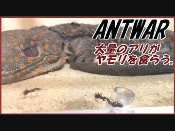大量のアリ達が巨大ヤモリを食べる!