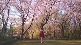 【踊ってみた】 桜ノ雨 【れいむ】