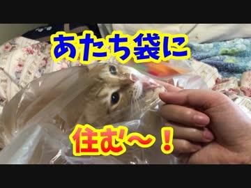 袋に大興奮な猫レンちゃん!カサカサ楽しそう(*'▽')
