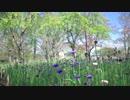[RX0 II]とある夫の昼散歩 花の季節