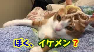 猫じゃらしの毛をカツラにしてみたらイケメン猫が爆誕した