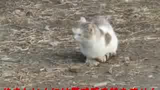 野良猫シリーズ 甘える仕草で警戒感が薄