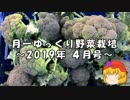 月一ゆっくり野菜栽培 2019年4月