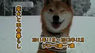 【柴犬ジロー】柴犬と田舎暮らし【Shiba Inu】