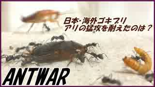 ついに決着!日本ゴキブリ・海外ゴキブリ・ミルワーム、最後までアリの猛攻に耐えたのは・・・。【後編】