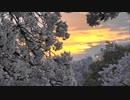 佐保川の桜並木の夕景
