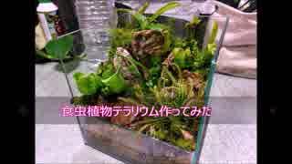 食虫植物テラリウム作ってみた