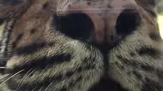 虎さんです