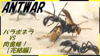 パラポネラvs肉食蜂~蜂が隠した武器と弱点~