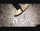 【釣り】釣り場を探せ! in 焼津 #01【自然】