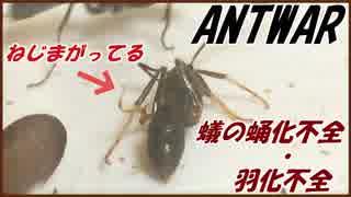 アリの蛹化不全と羽化不全。