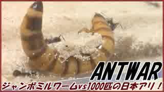 ジャンボミルワームVS1000匹の日本アリ~炸裂する大和魂~