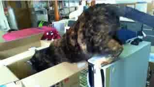 盗み食いが見つかり寝たふりする猫