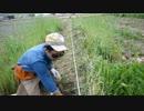 2019年4月1日:畝幅の変更作業とスコップを使った土起こし