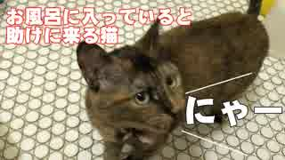 怖いお風呂に入っている主人を助けに来る猫