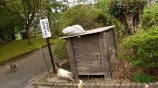 曽木の滝の猫達