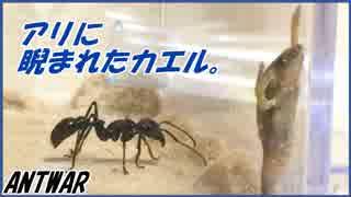 活きたカエルをアリに与えたら容赦なさすぎた。