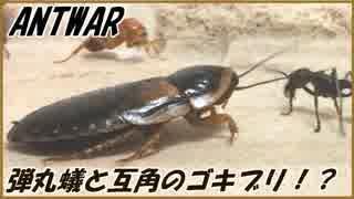 パラポネラとタメをはるゴキブリがいるという事実。
