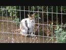 子猫が危なっかしい木登りを開始⇒母猫、心配で起き上がる
