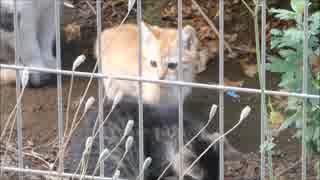 朝っぱらから母猫が子猫をうじゃうじゃ連れてきた