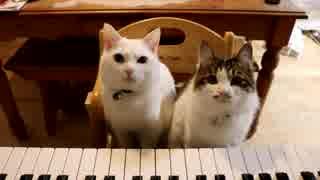 【猫ピアノ】素人とプロのレベルが違いすぎた