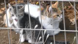 朝っぱらから母猫がお気に入りの子猫を紹介してきた