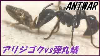 アリジゴクVSパラポネラ~個を超えた生存戦略~