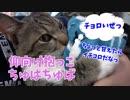 腕の中でちゅぱちゅぱ甘える暴君猫、誠君にギャップ萌えする動画。