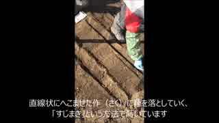 【たま農園】農園の空いているところに種