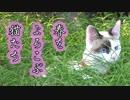 春をよろこぶ猫