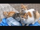 第20位:朝起きてシャッターを開けたら庭で野良猫家族が爆睡してたwww