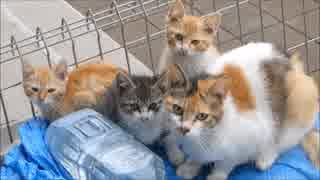 朝起きてシャッターを開けたら庭で野良猫家族が爆睡してたwww