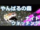 【沖縄】やんばるナイトウォッチング【Live Streaming With the Hero 7】