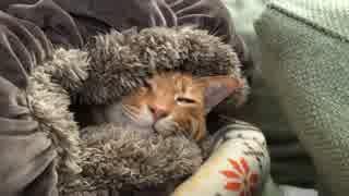 ベテラン子猫、クッションに包まれ謎生物になる
