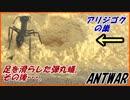 アリジゴクの巣に放り込まれた弾丸蟻は・・・。