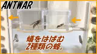2種類の蜂がアリの行く手を阻んだら、アリは逃げる?戦う?