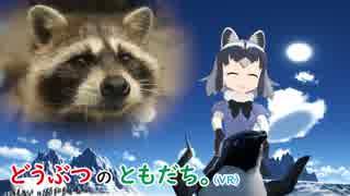 【動物紹介型Vtuber】どうぶつのともだち~アライグマ篇~【どうぶつとヒトシリーズ】