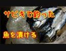 064【釣り】小サバでアンチョビ【料理】