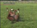 【競馬】引退馬 2005(ビッグレッドファーム~レックススタッド)